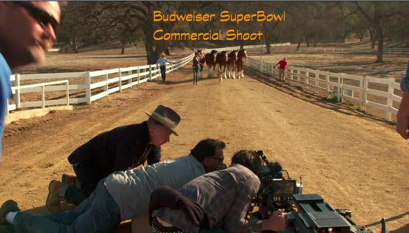 Budweiser Commercial Shoot II